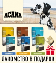 Лакомство в подарок при покупке корма Acana!